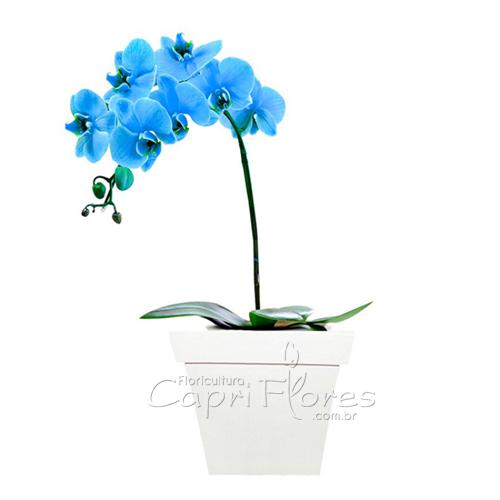 2301 ♥ Orquidea Azul