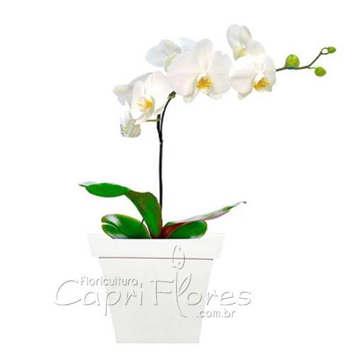 2302 ♥ Orquídea Branca