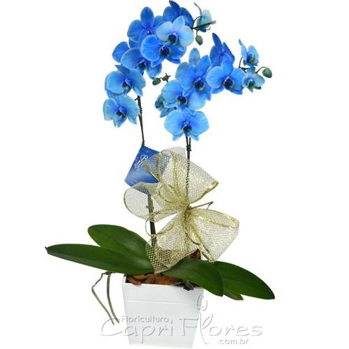 2355 ♥ Vaso de Orquídea Azul