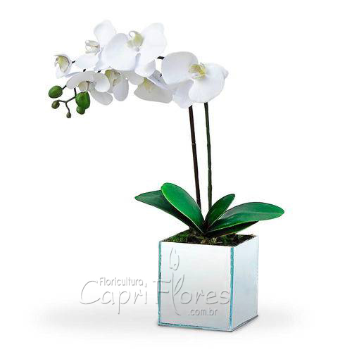 2357 ♥ Vaso de Orquídea Branca