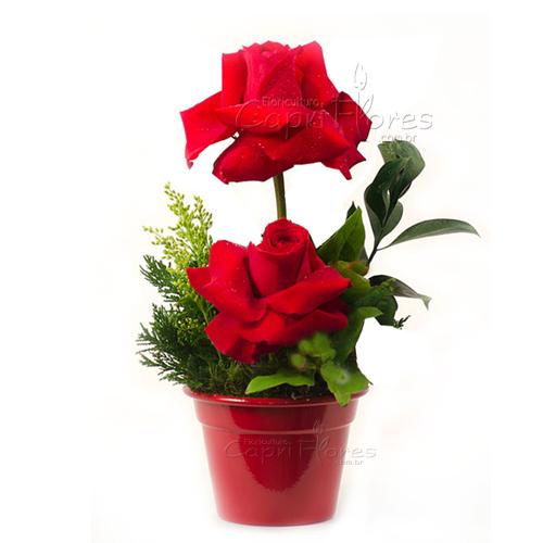 3209 Arranjo com Rosas Dobradas