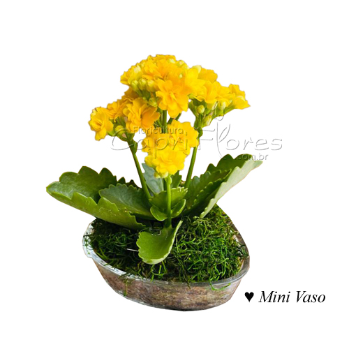 4448 ♥ Mini Vaso de Flor da Fortuna