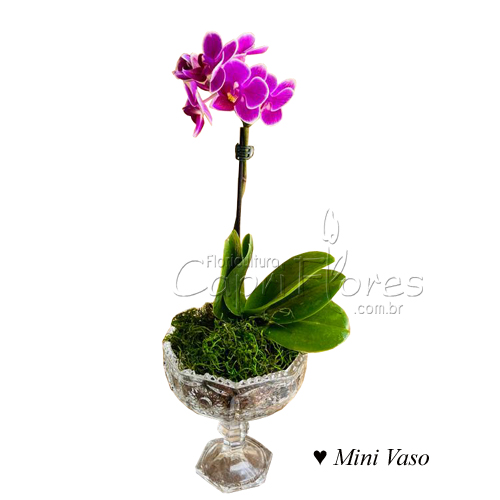 4449 ♥ Mini Vaso de Orquidea