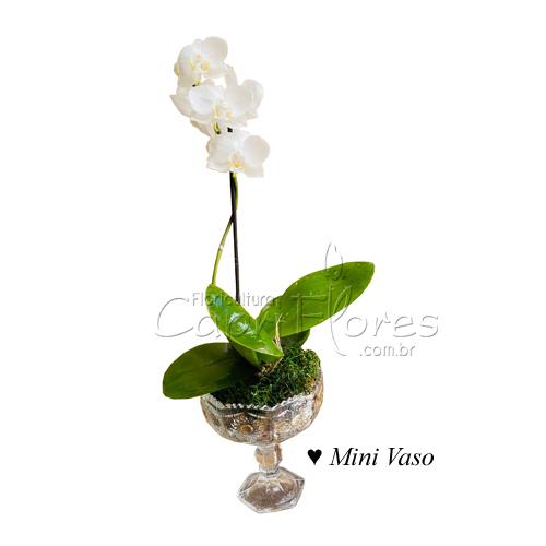 4450 ♥ Mini Vaso de Orquidea Branca