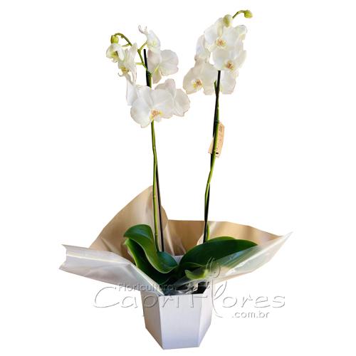 4460 ♥ SUPER PROMOÇÃOOOO..Vaso de Orquidea Branco