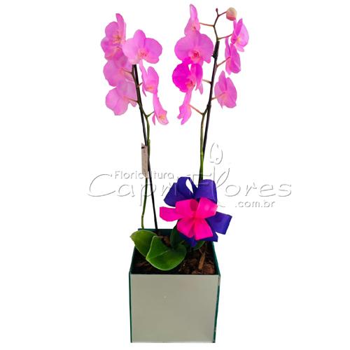 4486 ♥ Vaso de Orquidea Cor de Rosa I