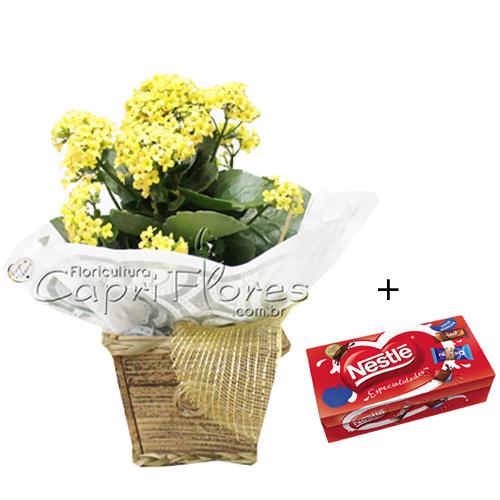 4873 Vaso Flor da Fortuna + Caixa de Bombom Nestlé