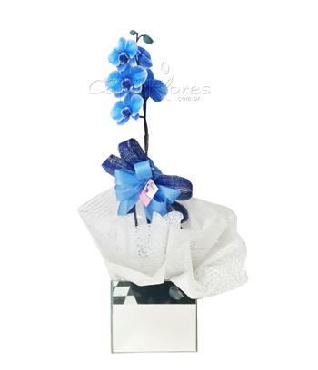 956 ♥ Orquidea Blue