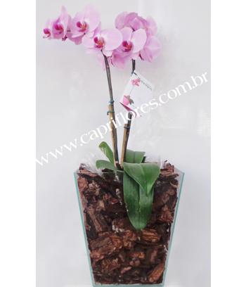 961 ♥ Orquídea Rosa
