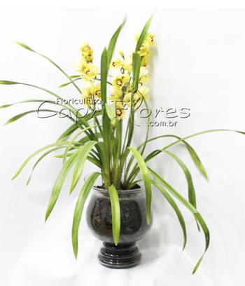 962 ♥ Orquídea em base de Vidro