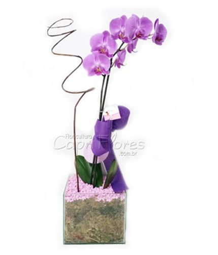 966 ♥ Orquídea Roxa